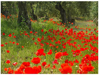 Olive Grove Outdoor Wall Art, , large
