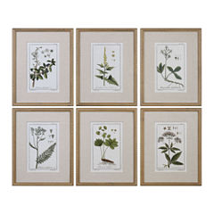 Floral Botanical Study Art (Set Of 6)