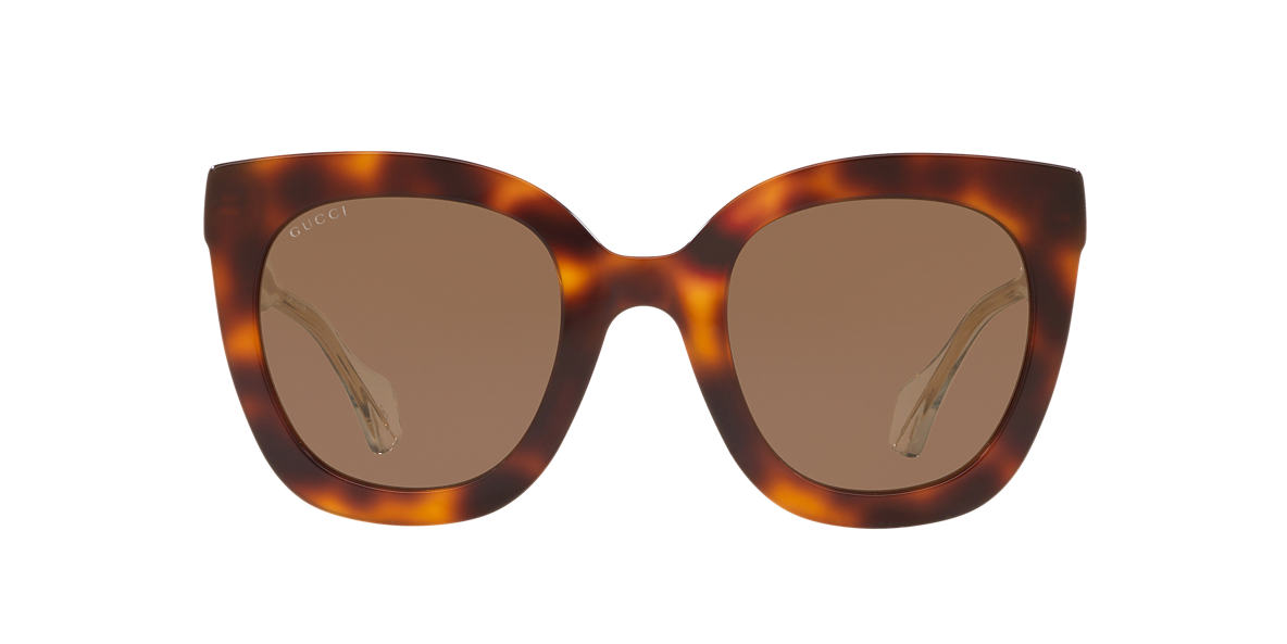 Tortoise Gg0564s Brown